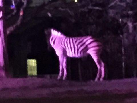天王寺動物園のナイトzoo