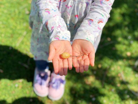 木の実を持つ女の子