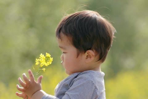保育園に2歳児で入りやすいはウソ【入りやすい年齢と2歳で入園する対処法】